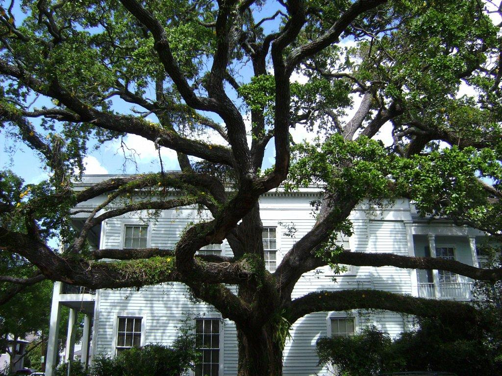 Geert-Driessen-New-Orleans-St-Charles-Av-01.JPG