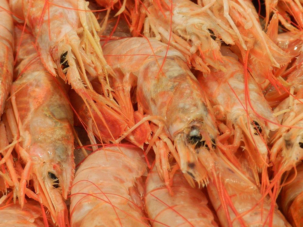 Geert-Driessen-Cadiz-Mercado-Central-09.JPG